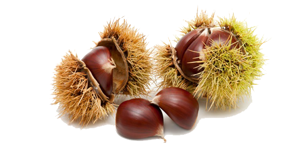 chestnuts_burr_5701